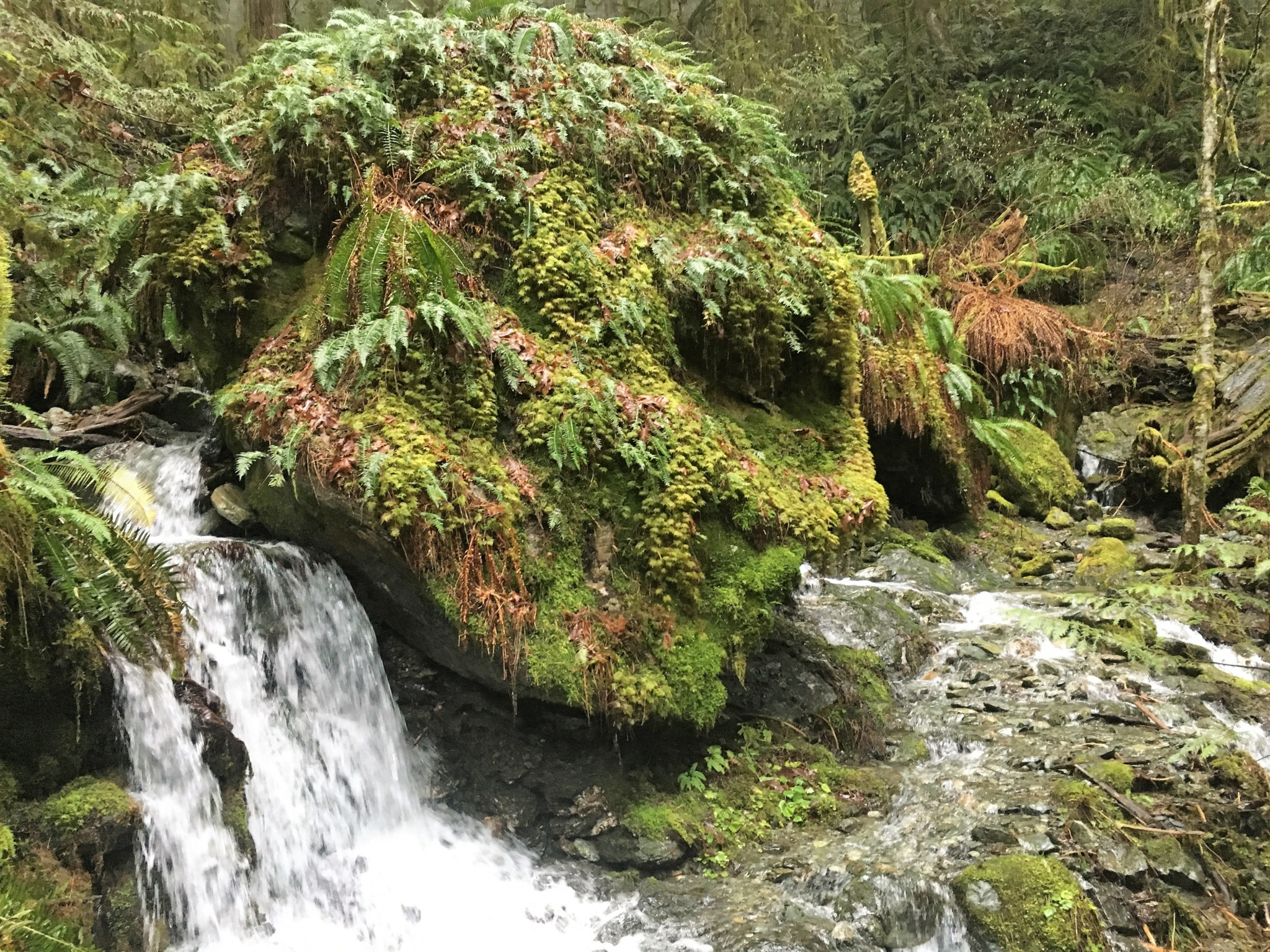 marblemount chat sites Washington campsites site located in anacortes in washington is describes with essential camp site information we provide a detailed camp site description as accurately as possible.